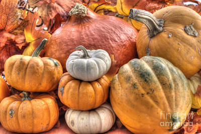 Photograph - Pumpkin And Gourds by Juli Scalzi