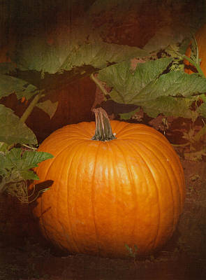 Pumpkin Patch Photograph - Pumpkin by Angie Vogel