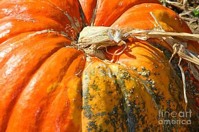 Photograph - Pumpkin Crust by Diana Raquel Sainz