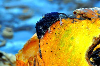 Mud Mixed Media - Pumpkin Dweller by Heather L Wright