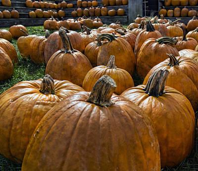 Pumpkin Farm Art Print by Peter Chilelli