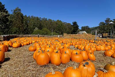Olantern Photograph - Pumpkin Farm by Scott Hill