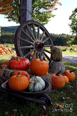 Photograph - Pumpkin Farm Stand by Kerri Mortenson