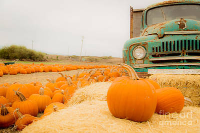 Photograph - Pumpkin Farm by Theresa Ramos-DuVon