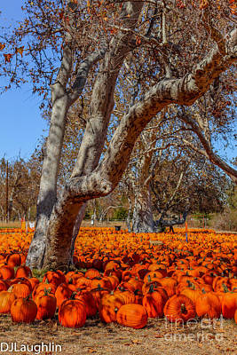 Photograph - Pumpkin Field by DJ Laughlin