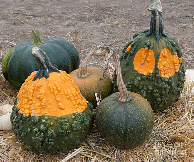 Photograph - Pumpkin Groupies  by Minnie Lippiatt