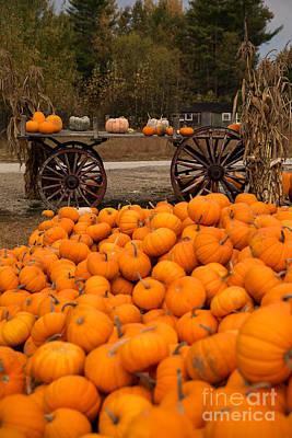Pumpkin Harvest Art Print by Brenda Giasson