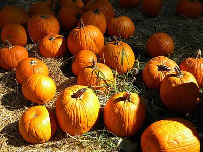 Pumpkin Fields Photograph - Pumpkin Harvest by Frank Wilson
