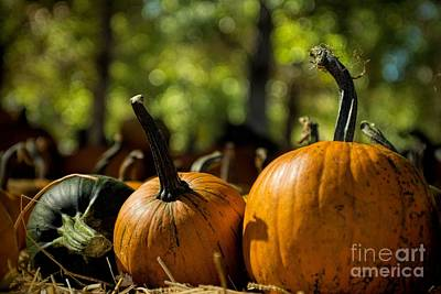 Photograph - Pumpkin Line Up by Peggy Hughes