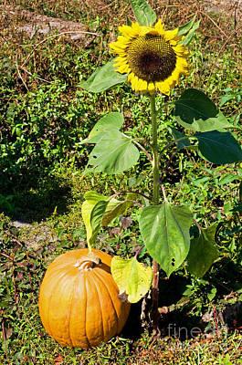 Cucurbitaceae Photograph - Pumpkin by Millard H. Sharp