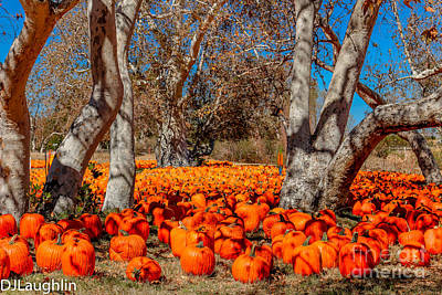 Photograph - Pumpkin Patch by DJ Laughlin