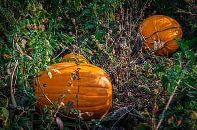 Photograph - Pumpkin Patch by Gene Sherrill