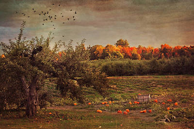 Photograph - Pumpkin Patch In Autumn by Joann Vitali