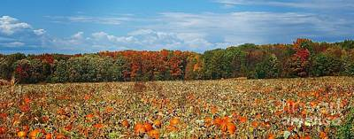 Photograph - Pumpkin Patch - Panorama by Gena Weiser