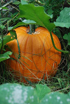 Art Print featuring the photograph Pumpkin Patch by Ramona Whiteaker