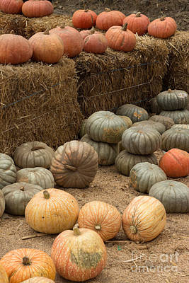 Photograph - Pumpkin Patch by Suzanne Luft