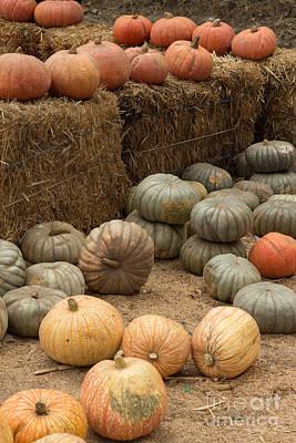 Photograph - Pumpkin Patch by Suzanne Luft