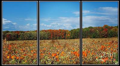 Photograph - Pumpkin Patch Triptych by Gena Weiser