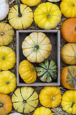 Miniature Photograph - Pumpkin Pattern by Tim Gainey