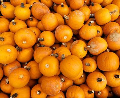 Winter Animals - Pumpkin Pile by David Kay