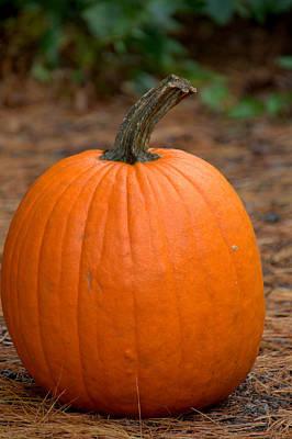 Photograph - Pumpkin Portrait by Caroline Stella