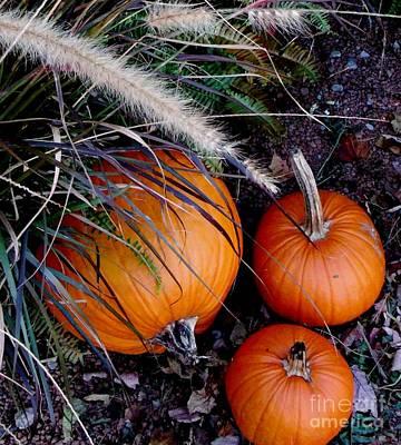 Photograph - Pumpkin Portrait by Gail Matthews