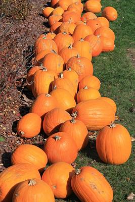 Photograph - Pumpkin Row At Meadowbrook by Michael Saunders