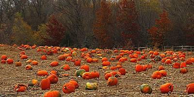 Photograph - Pumpkin Season by Elizabeth Winter