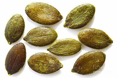 Photograph - Pumpkin Seeds by Craig B