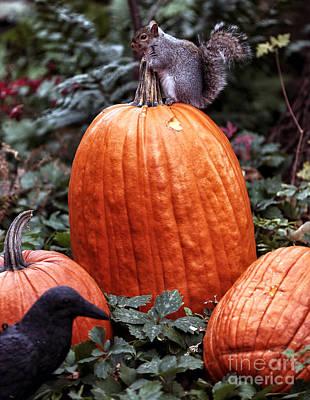 Photograph - Pumpkin Thief by John Rizzuto