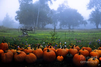 Photograph - Pumpkin Time by Alana Ranney