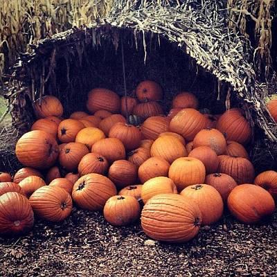 Fall Photograph - Pumpkin Time by Becky Gargan