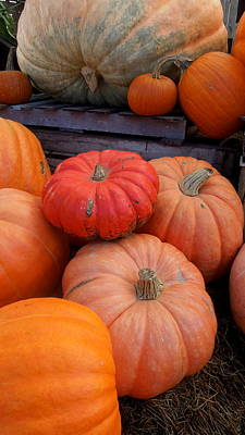 Photograph - Pumpkin Time by Caroline Stella