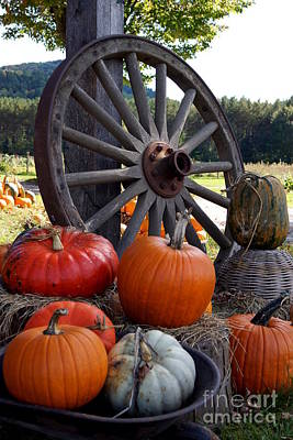 Photograph - Pumpkin Wheel by Kerri Mortenson