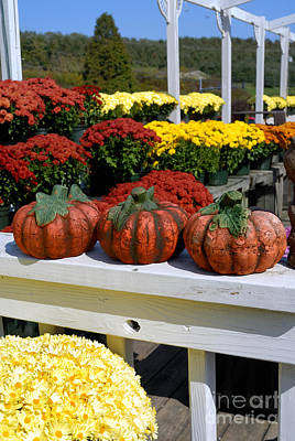 Pumpkins And Fall Flowers Print by Amy Cicconi
