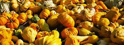 Pumpkins And Gourds In A Farm, Half Art Print