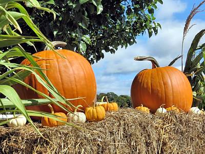 Photograph - Pumpkins And Gourds On Display by Janice Drew