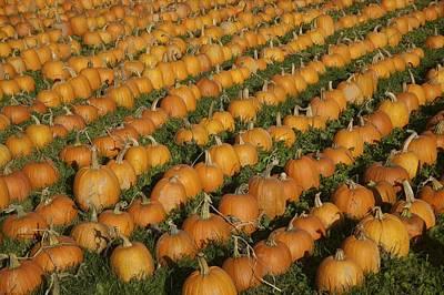 Photograph - Pumpkins by Byron Jorjorian
