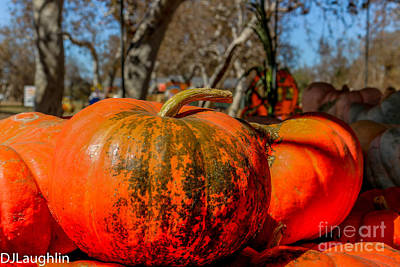 Photograph - Pumpkins Close by DJ Laughlin