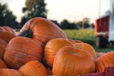 Photograph - Pumpkins by Dan Sproul