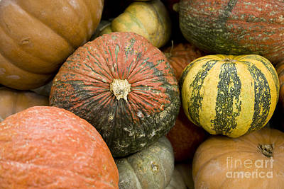 Photograph - Pumpkins by David Millenheft
