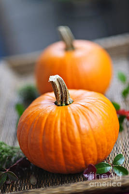 Thanksgiving Photograph - Pumpkins by Elena Elisseeva