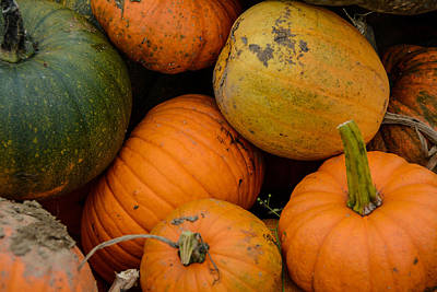 Photograph - Pumpkins Fresh From The Field by At Lands End Photography