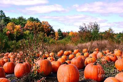 Pumpkins Galore Art Print by Lisa Kilby