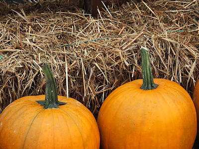 Photograph - Pumpkins by Gene Cyr