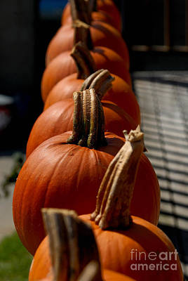 Harvesting Photograph - Pumpkins In A Row by Amy Cicconi