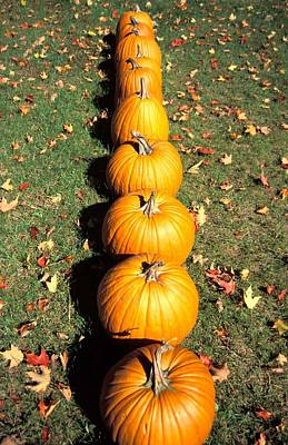 Thanksgiving Wall Art - Photograph - Pumpkins In A Row by Anonymous