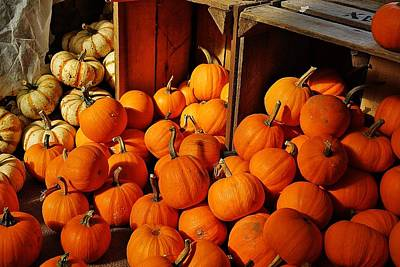 Photograph - Pumpkins In Shadow by Jean Goodwin Brooks