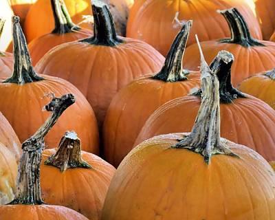 Photograph - Pumpkins by Janice Drew