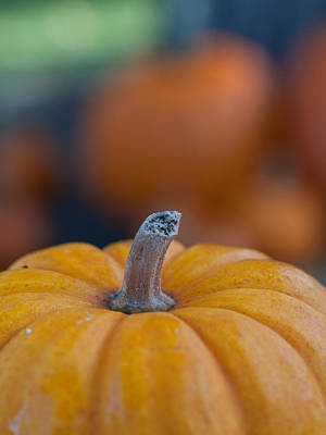 Photograph - Pumpkins by Jim DeLillo